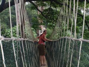 Canopy Walkway Taman Negara Malaysia