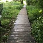 Wildpark Schorfheide – Foto- & Erfahrungsbericht mit Kindern