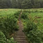 Erpetal Wanderweg ab Hoppegarten – Perfekter Herbst-Spaziergang