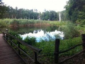 Kleiner Teich im Teufelsmoor