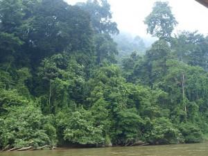 Regenwald im Taman Negara Malaysia