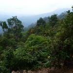 Reisebericht Taman Negara Nationalpark – Tour in den Regenwald von Malaysia