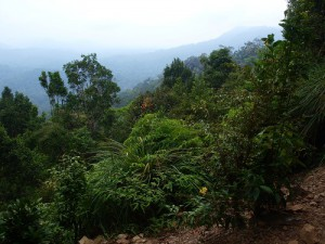Viewpoint Bukit Terisek Taman Negara