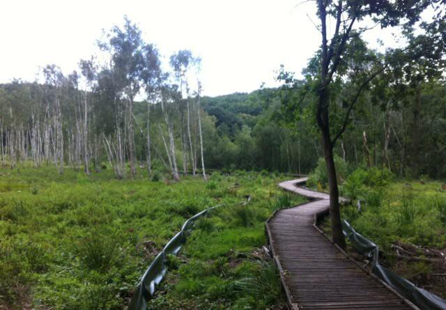 Holzsteg durch das Teufelsmoor am Wanderweg des Teufelssee