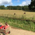 Unser perfektes Vater-Kinder Wochenende – Eine Foto-Reportage