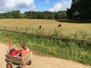 Bollerwagen im Wildpark Schorfheide