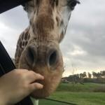 Erfahrungsbericht Serengeti Park Hodenhagen – Lohnt es sich für Familien mit Kindern?