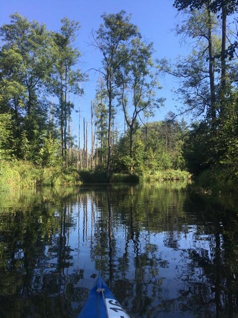 Per Kajak und Kanu durch den Hochwald im Spreewald