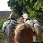 Kremserfahrt & Western-Ranch in Krummensee – Ausflug mit der Pferdekutsche