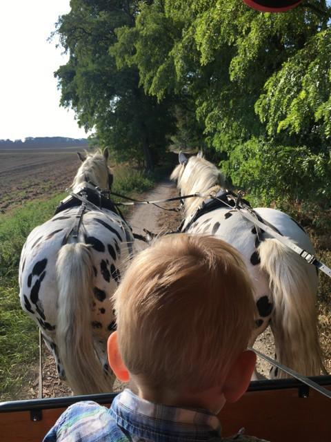 Kremserfahrt mit Kinder