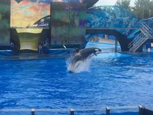 Orca-Show im Seaworld Orlando Florida