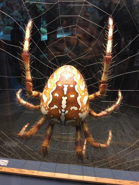 Spinne im Naturkundemuseum Berlin
