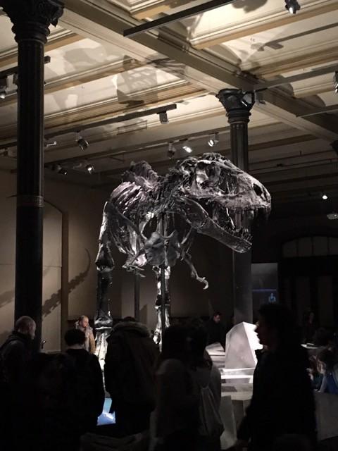 T-Rex Tristan alias Scharfzahn im Naturkundemuseum Berlin