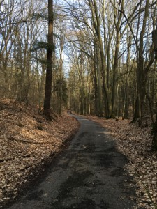 Wanderweg zu den Markgrafensteinen schlängelt sich durch den Wald der Rauenschen Berge