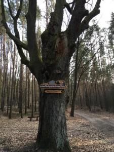 Wegweiser: Wanderung zu den Markgrafensteinen