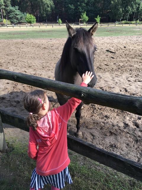 Wilde Pferde im Wildpark Schorfheide