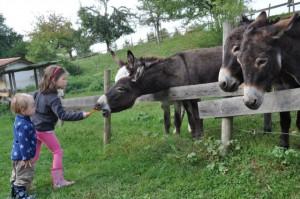 Wohnmobil Rundreise in die Alpen - Bauernhof Camping am Bodensee