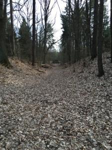 Zugang zum großen Markgrafenstein im Wald